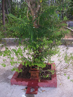 Tulasi Katte is found in front of many houses ...