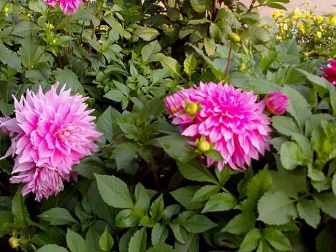 Bloom in flowers in Springs