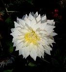 white-flower-20130402x640